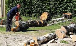 Sommerfeld Grünanlagen Baumpflege Rodung Spezialfällung