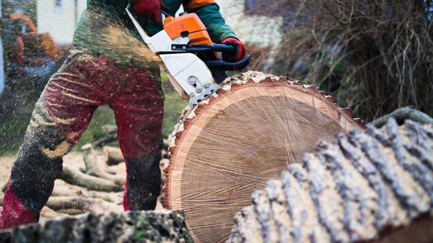 Sommerfeld Grünanlagen Baumfällarbeiten