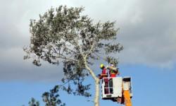 Sommerfeld Grünanlagen Baumarbeiten